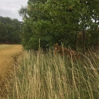 Zwischen den Feldern ist der Weg nicht mehr zu erkennen.