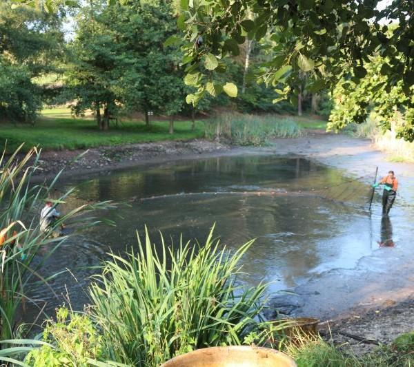 Das der Teich eine grundlegende Auffrischung benötigt, ist auch in halbabgelassenem Zustand ersichtlich.