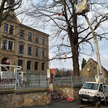 ... und werden von den Freitaler Stadtwerken in den beiden Eichen platziert!